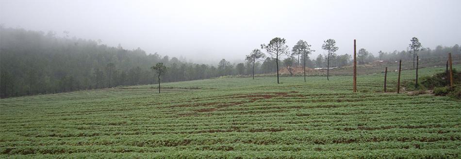 玉龙雪山 玛咖种植基地