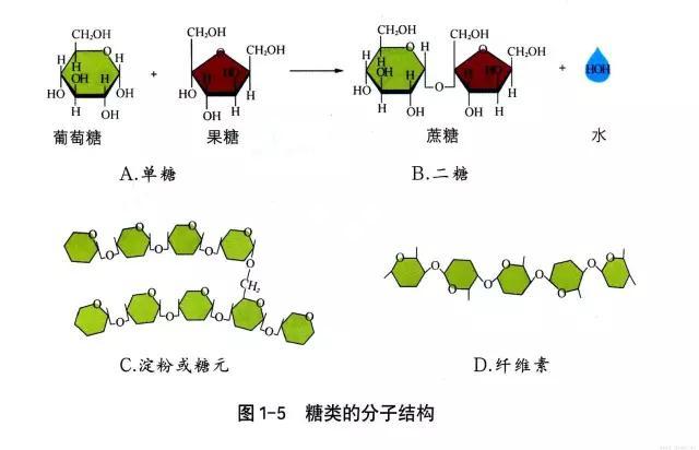 糖类的分子结构